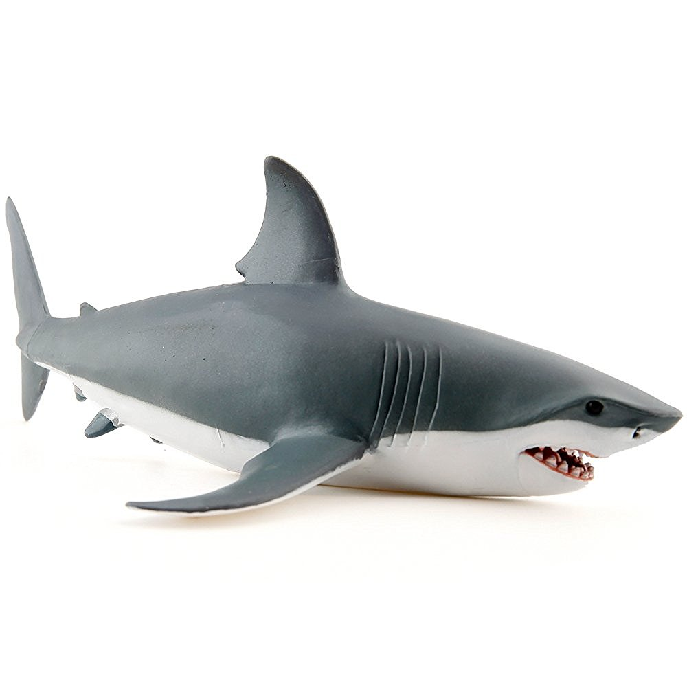 shark-squalo-papo_