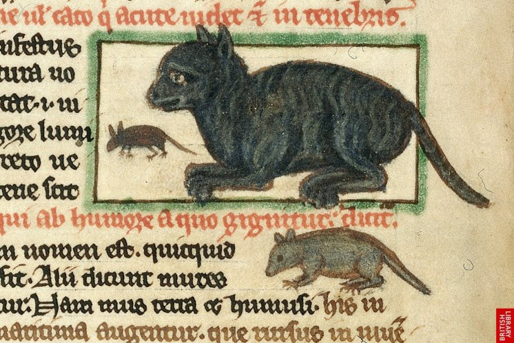 medieval-cats