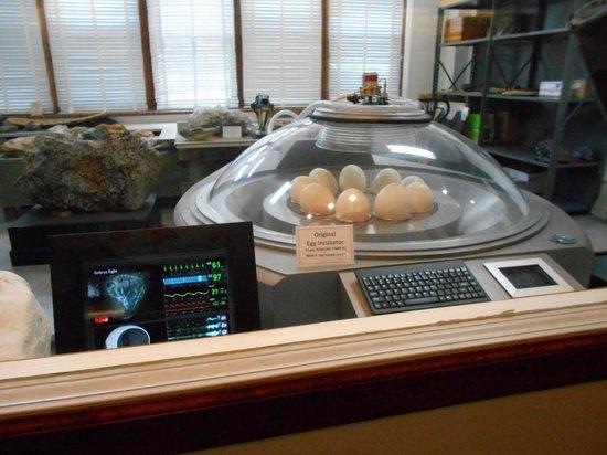egg-incubator-from-jurassic