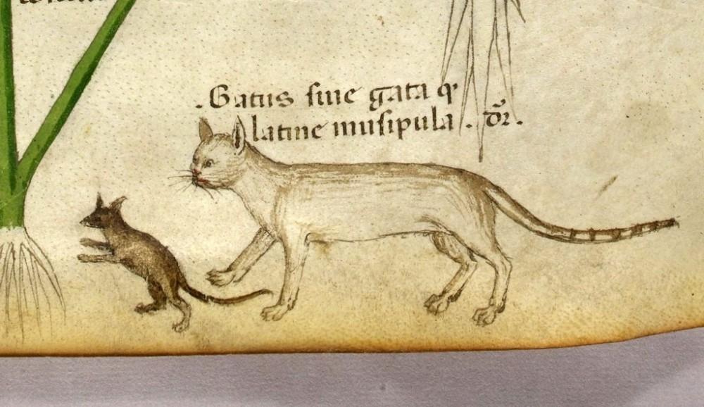 gatto-topo-medioevo-monster-movie
