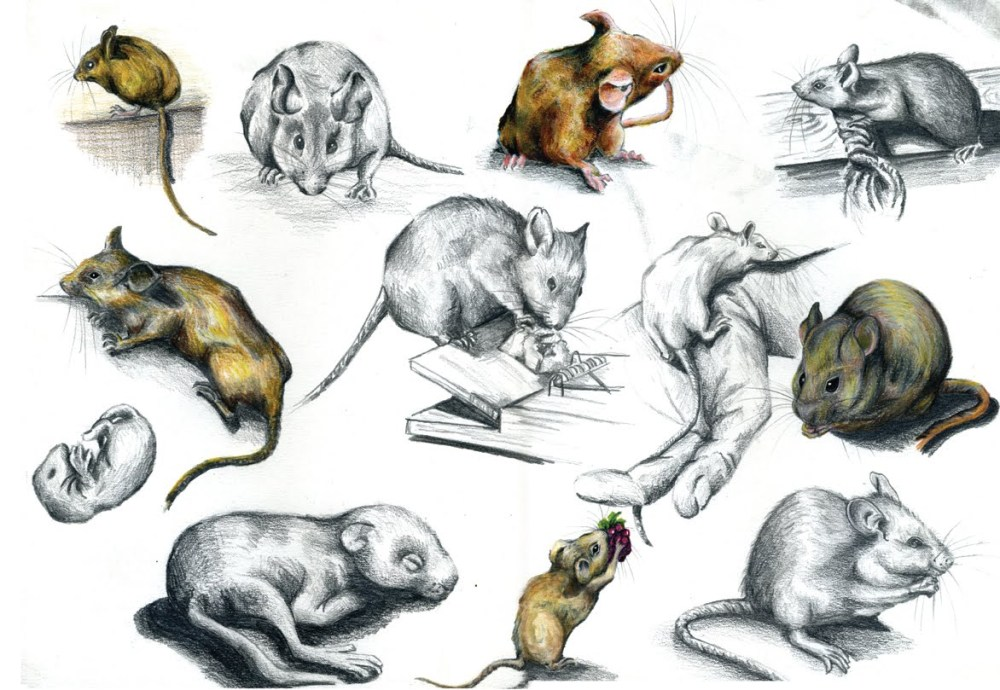 mouse-illustration