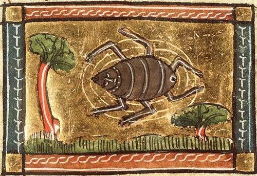 spider middle age medioevo mostruoso monster ragno
