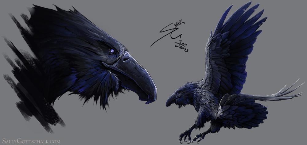 bird-concept-art-crow