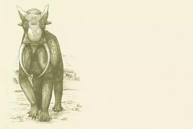 elephant elefante senza pelle carne proboscide