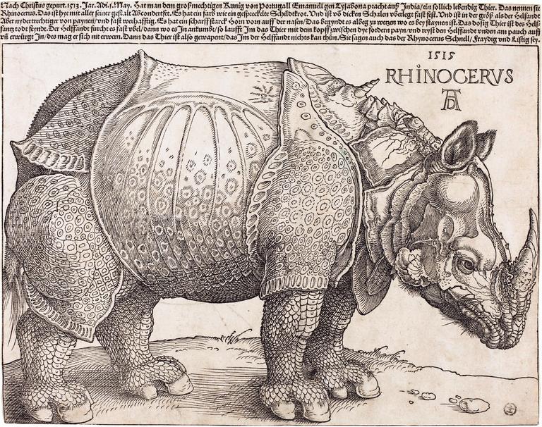 11mag-rhino-1-master768.png