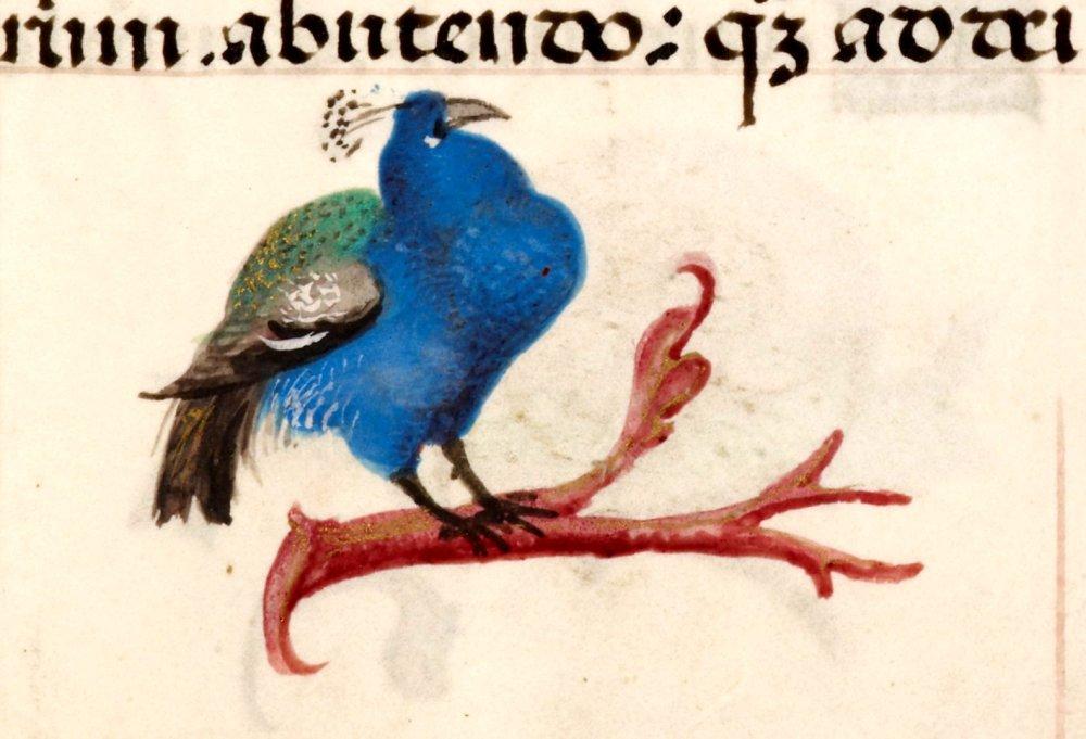Pavone-obeso-Libro-dOre-di-Giovanna-di-Castiglia-Fiandre-1486-1506-British-Library-Londra..jpg
