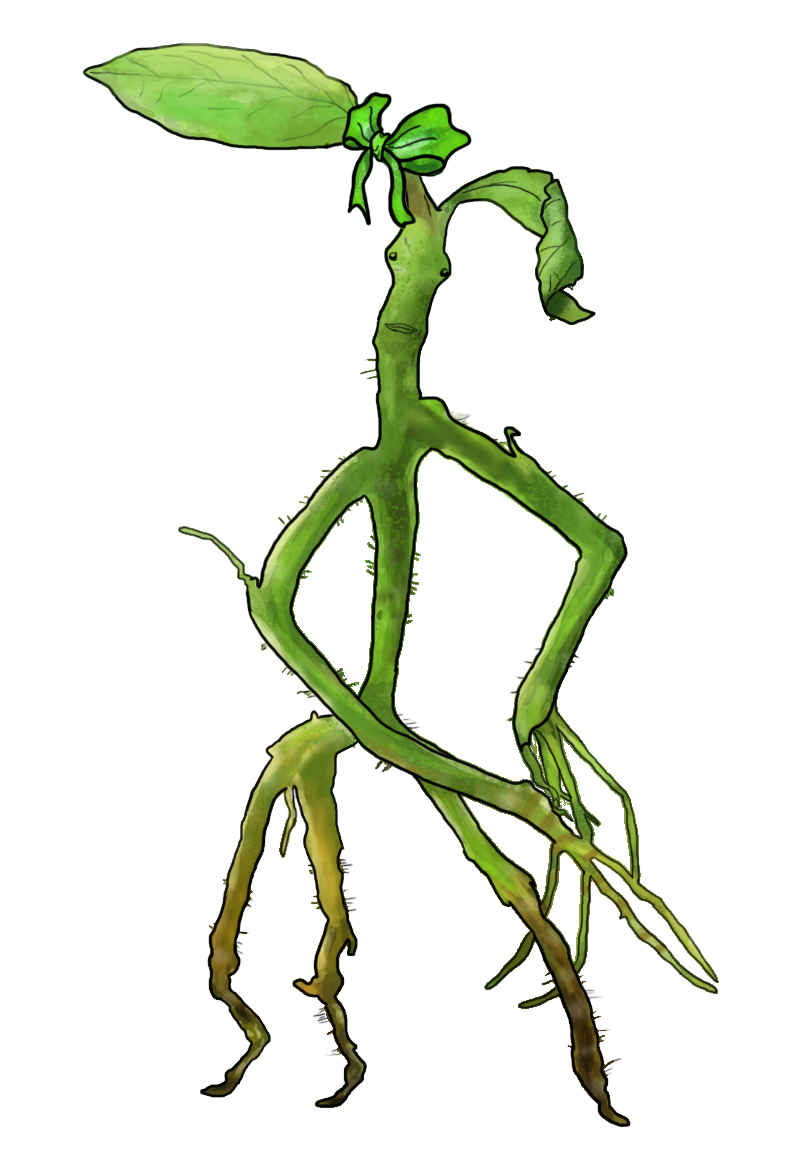 bowtruckle-monstermovie_asticello-animali fantastici.png