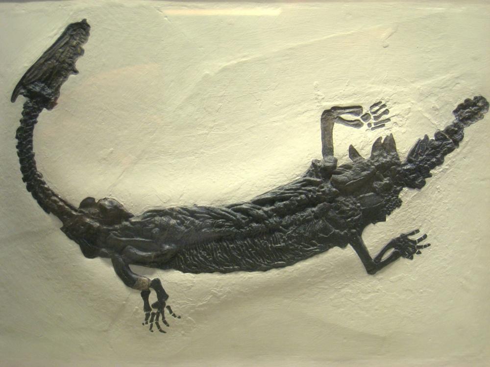 Lariosaurus_Mostro_lago como_lariosauro.jpg