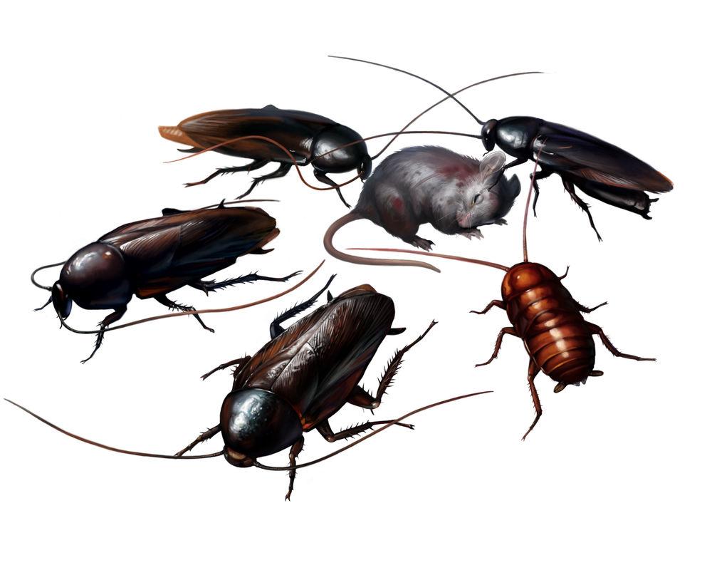 CockroachesRE2