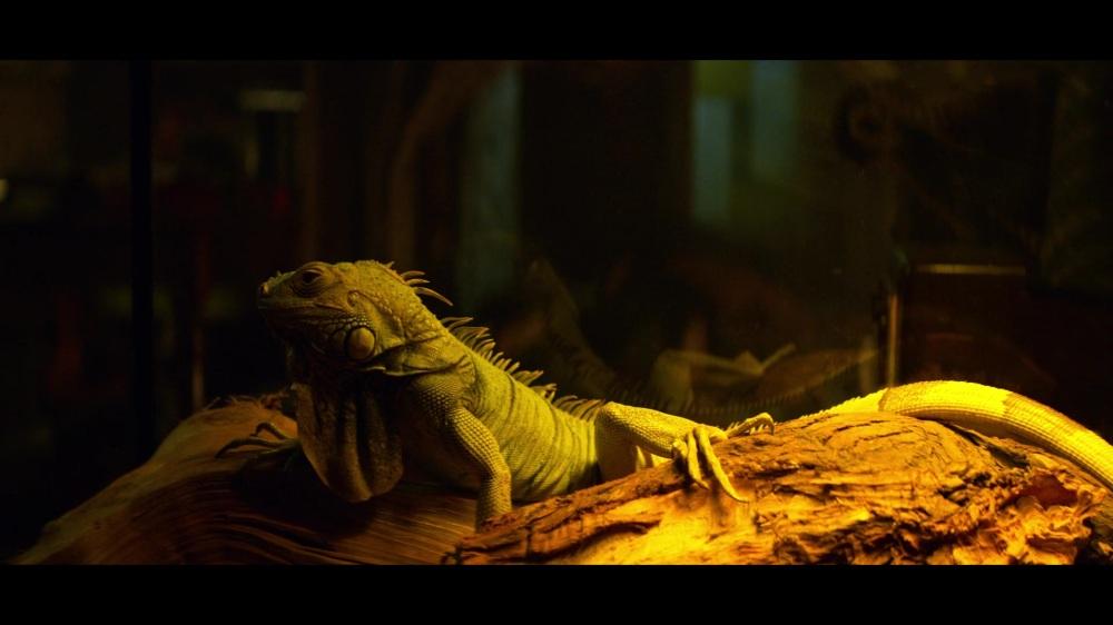 CAOS-Caps-1x03-The-Trial-of-Sabrina-Spellman-91-Connor's-Iguana-Familiar.jpg