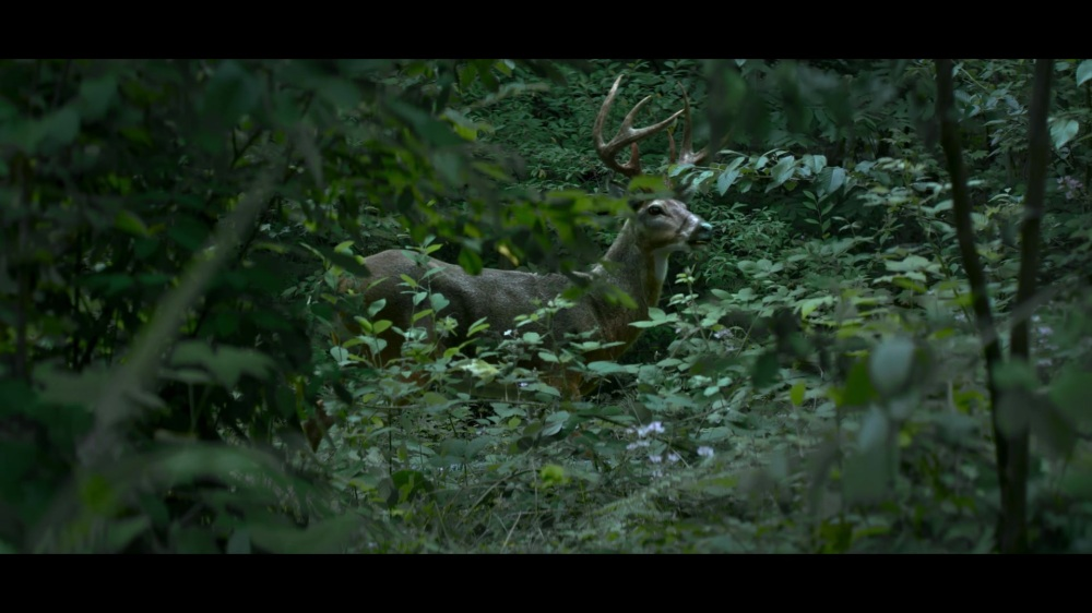 CAOS-Caps-1x07-Feast-of-Feasts-79-Deer-familiar.jpg
